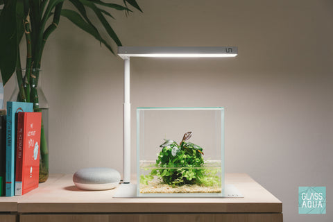 Wabi Kusa Planted Aquarium Tank Kit