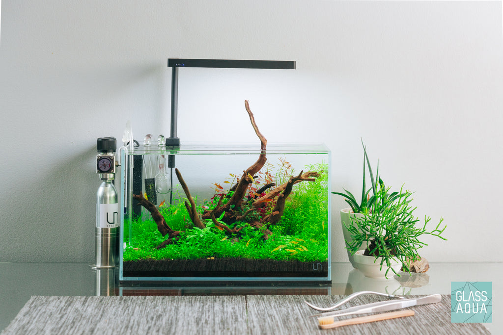 Shop Planted Aquarium Spider Wood Hardscape - Glass Aqua