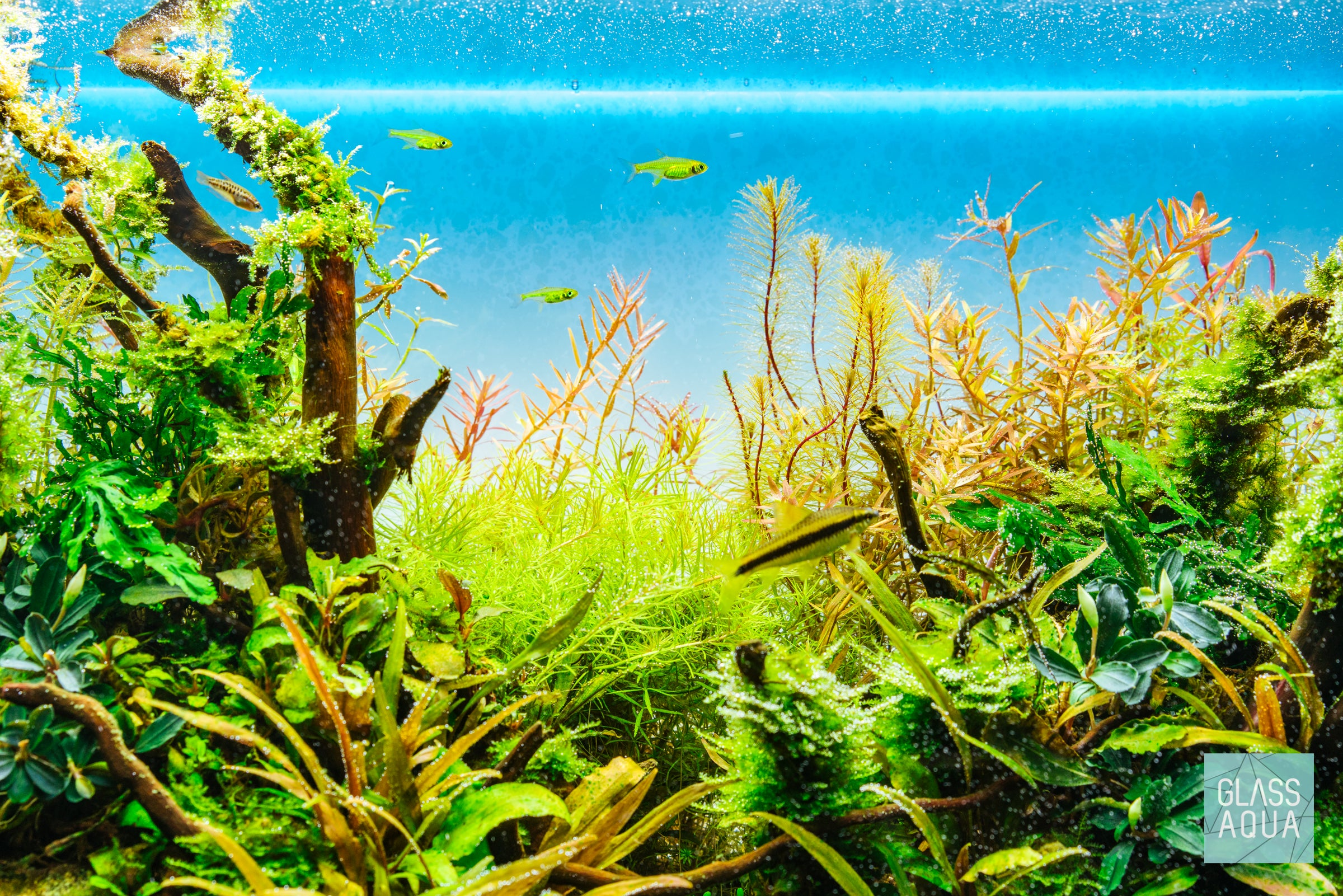 ADA 60P Nature Aquarium Planted Tank
