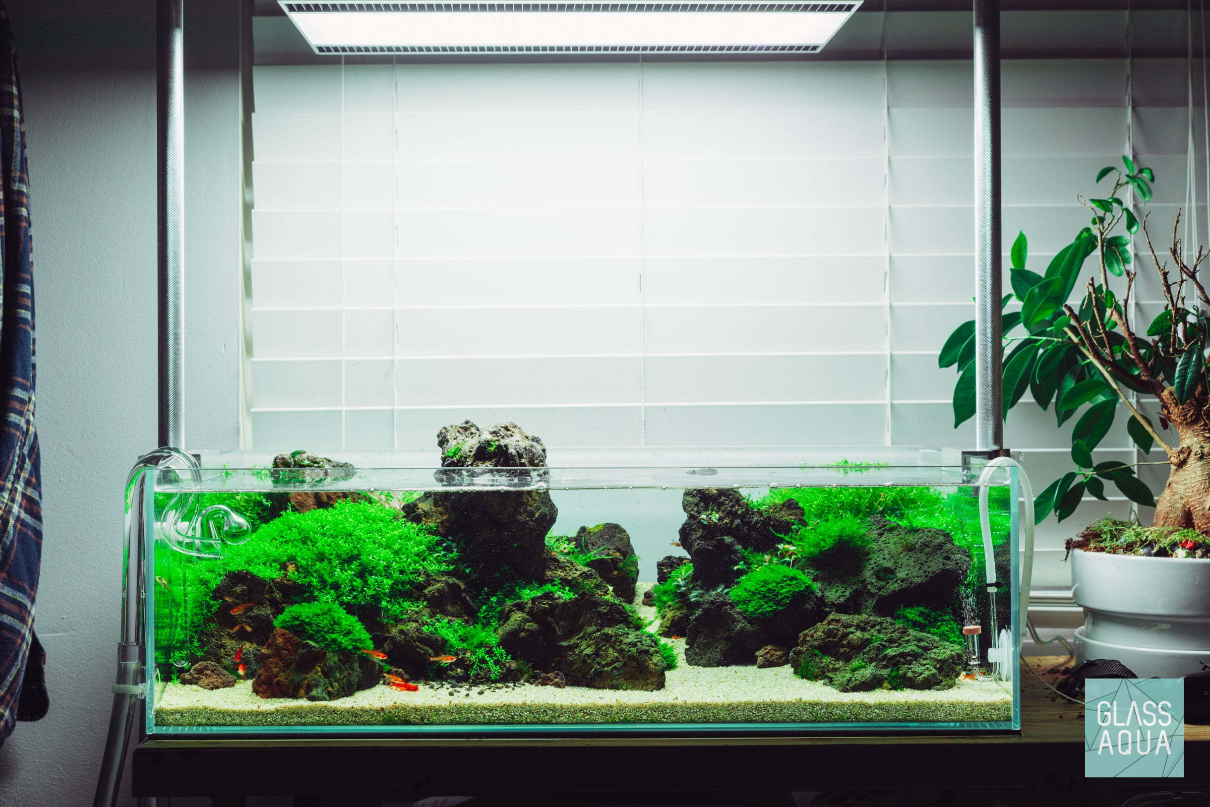 UNS 60S Shallow Planted Tank