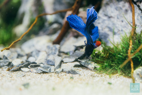 Seiryu Accent Stones Betta Fish Tank