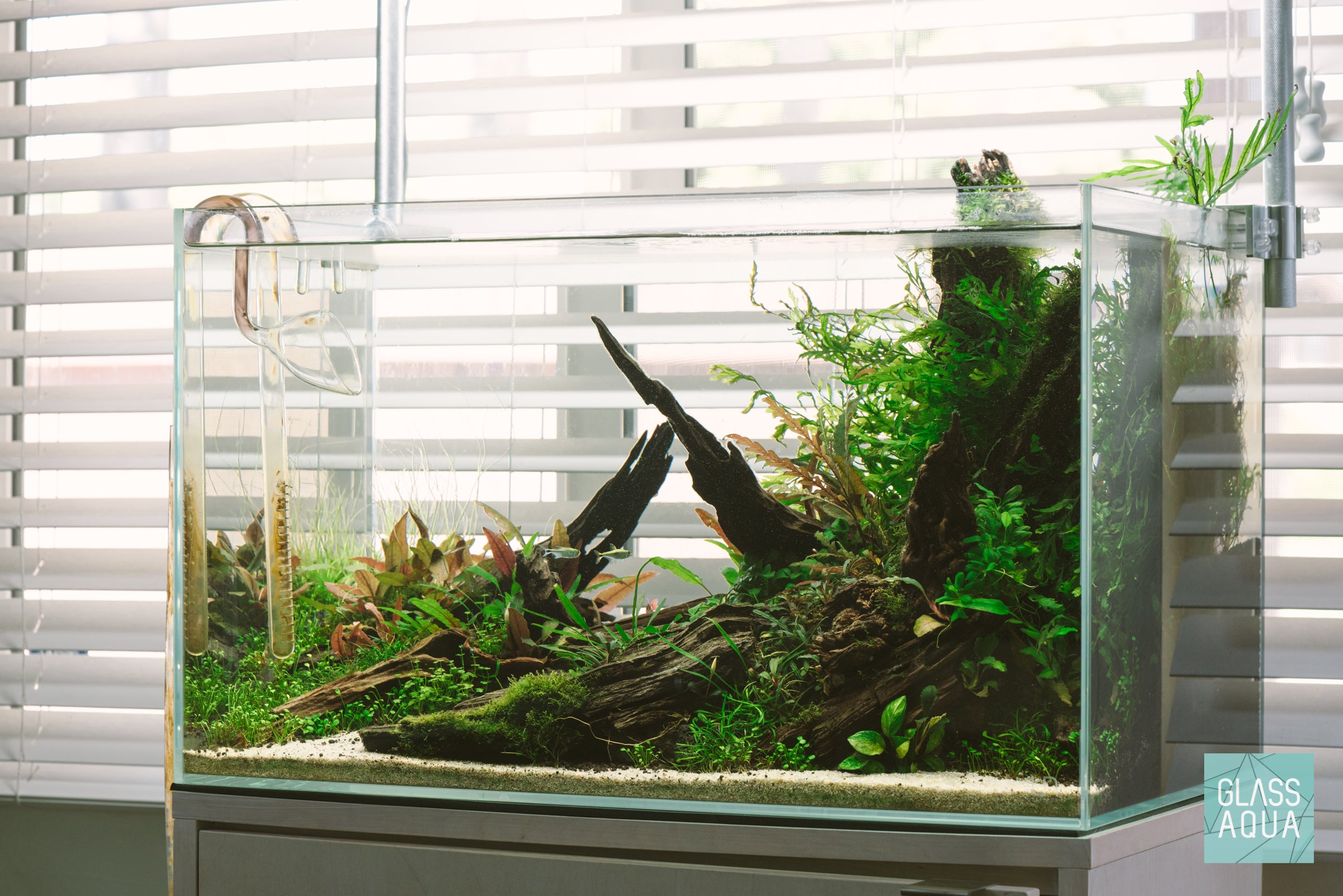 Ultum Nature Systems Nature Aquarium Planted Tank