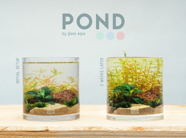 Glass Aqua POND Aquatic Planter Cup Kit