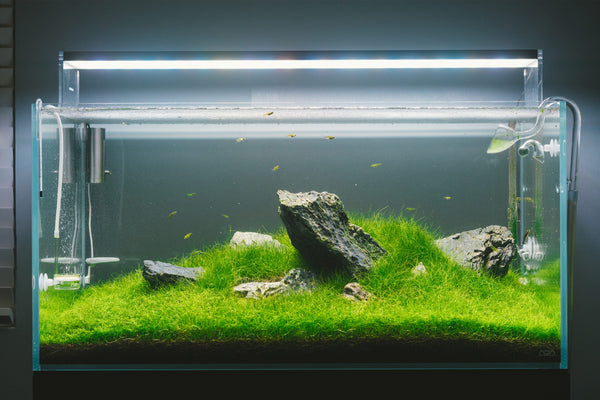ADA 90-P Glass Aqua Planted Tank Aquarium