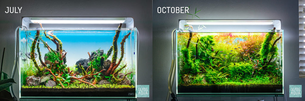 ONF Flat ONE LED Light Planted Aquarium Comparison