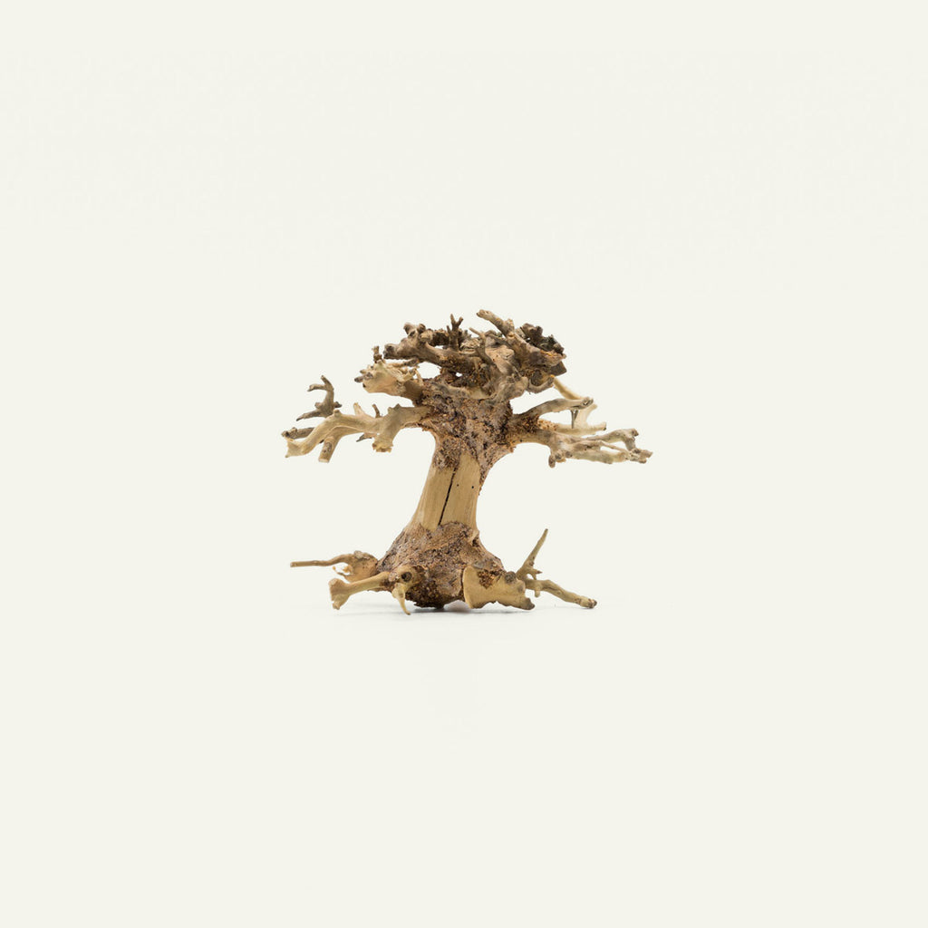 Shop Bonsai Tree Driftwood Mini Accent Hardscape - Glass Aqua
