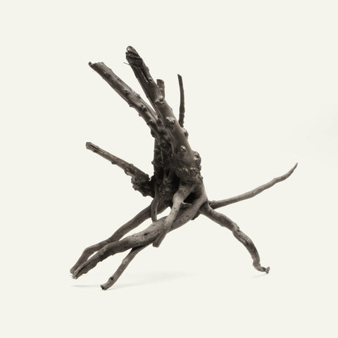 Shop Black Forest Spider Wood Hardscape - Glass Aqua