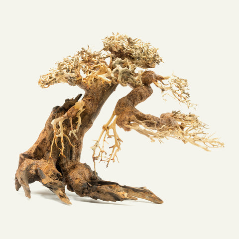 Shop Bonsai Tree Driftwood Medium Hardscape - Glass Aqua