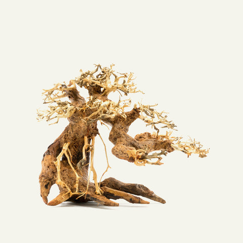 Shop Bonsai Tree Driftwood Small Hardscape - Glass Aqua
