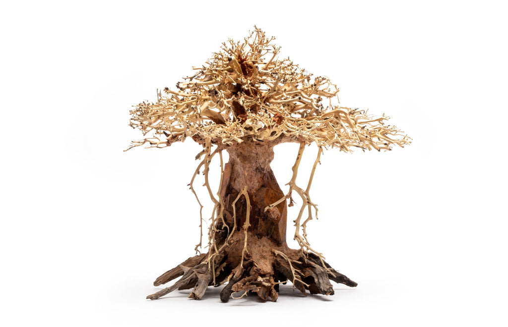 Shop Bonsai Tree Driftwood Africana Hardscape - Glass Aqua