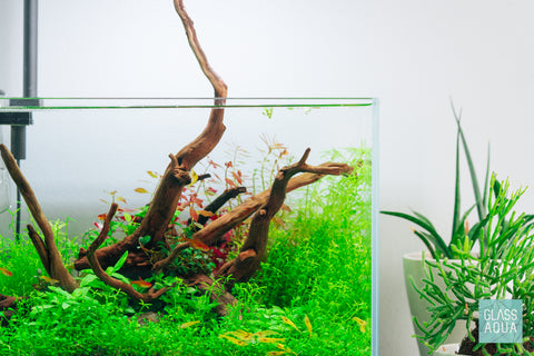 Shop Spider Wood Nano Hardscape - Glass Aqua