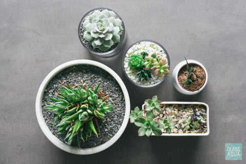 Glass Aqua Succulent Cup Planter Kit