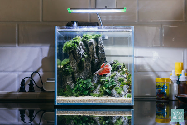 Ultum Nature Systems 2C Cube Betta Aquarium Tank