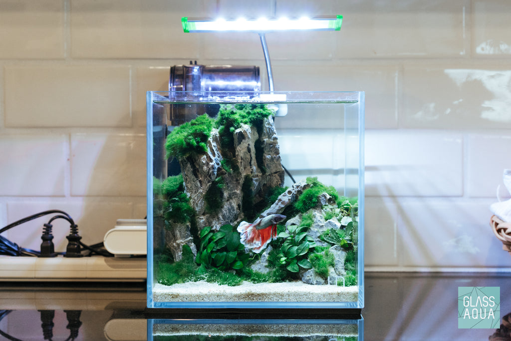 Planted Betta Fish Aquarium Tank