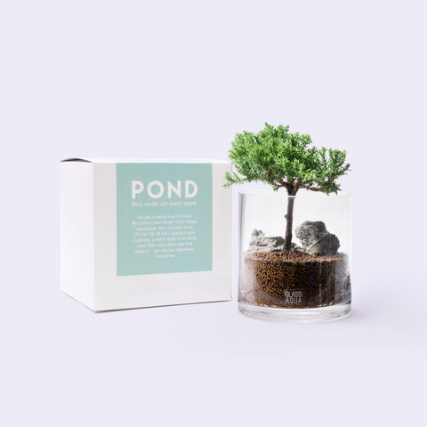 Glass Aqua Bonsai Cup Planter Kit