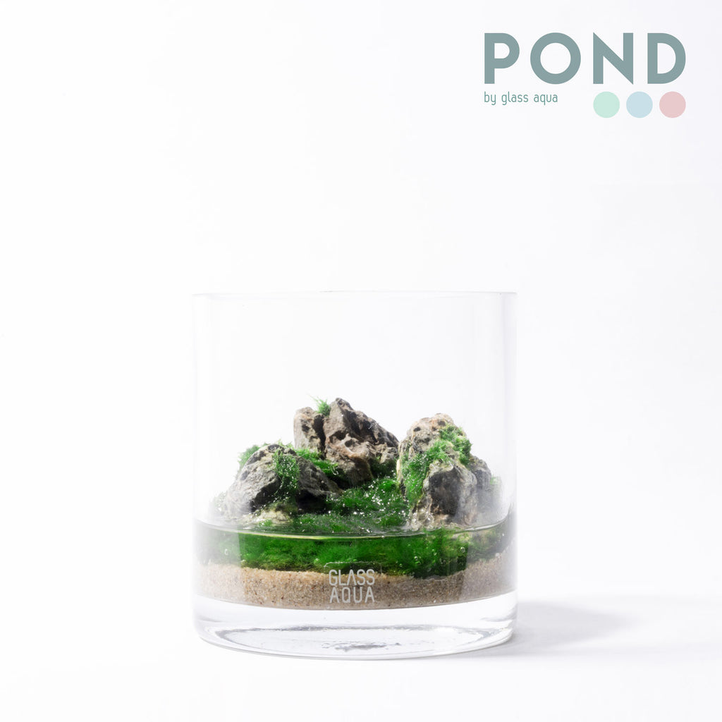 Shop Glass Aqua POND Cup Planter Kit Bundles and Kits - Glass Aqua