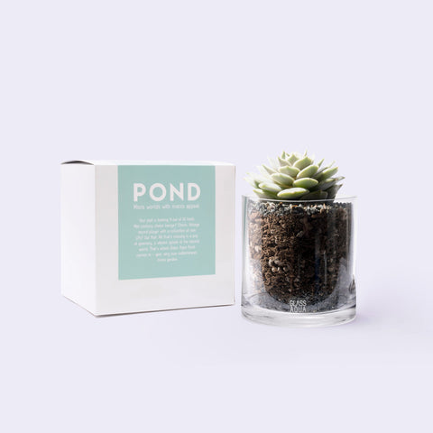 Shop Glass Aqua Succulent Cup Planter Kit Bundles and Kits - Glass Aqua