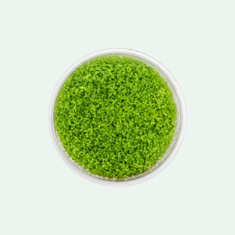 Shop Hemianthus Callitrichoides 'Cuba' Tissue Culture by UNS Aquatic Plants - Glass Aqua