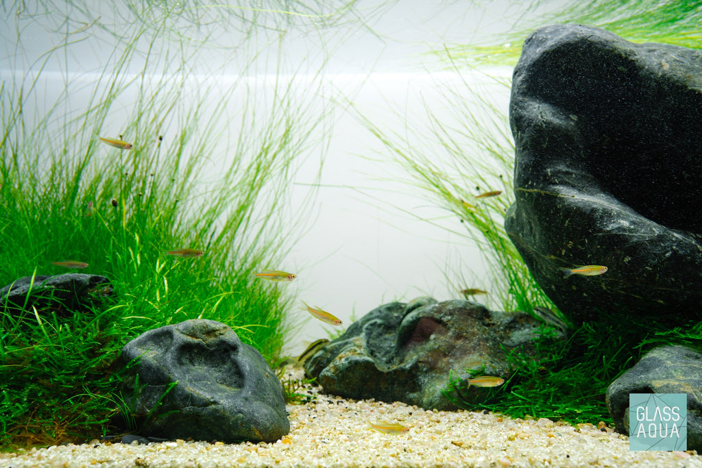Hakkai Stone Pahai Stone Planted Aquarium Aquascaping Rock