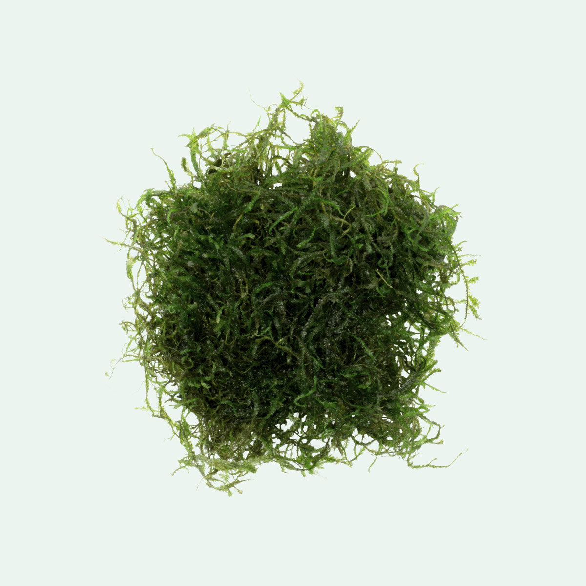 Java Moss - Glass Aqua