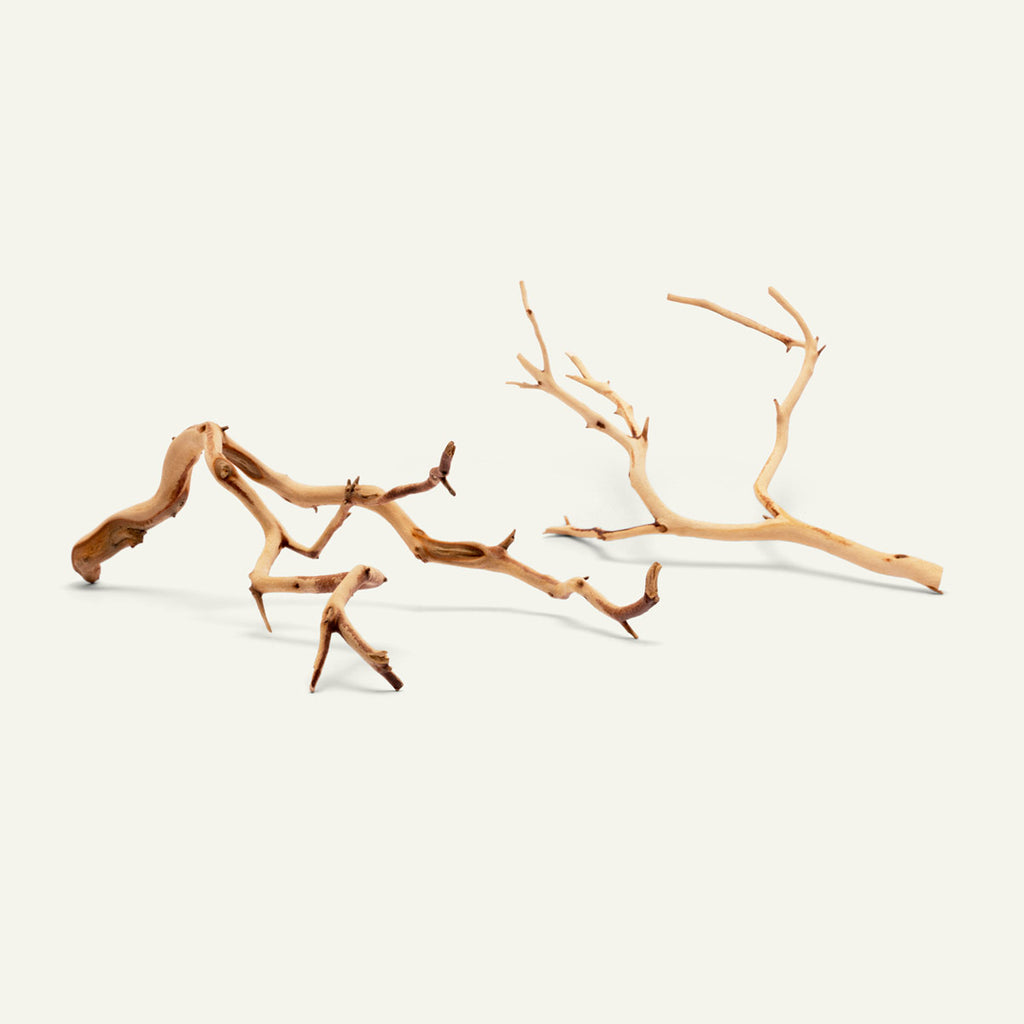 Shop Manzanita Twig Wood Hardscape - Glass Aqua