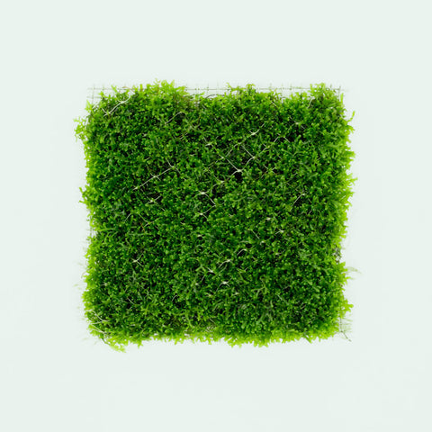 Shop Mini Pellia Large Mat Aquatic Plants - Glass Aqua