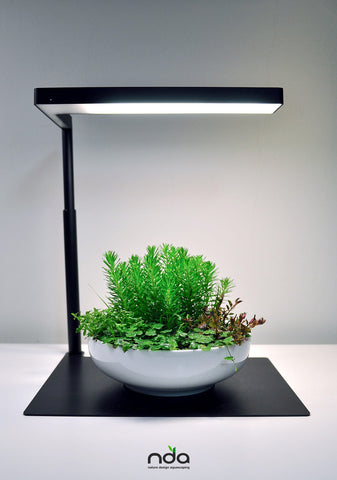 Shop ONF Flat Nano Stand LED Light - Black Lighting - Glass Aqua