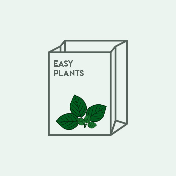 Shop Mystery Easy Plant Bag Bundles and Kits - Glass Aqua
