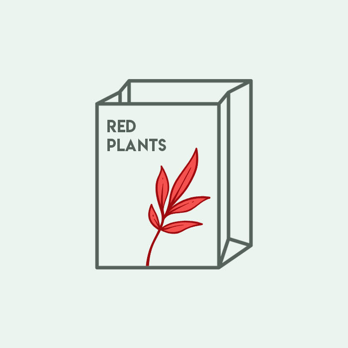 Shop Mystery Red Plant Bag Bundles and Kits - Glass Aqua