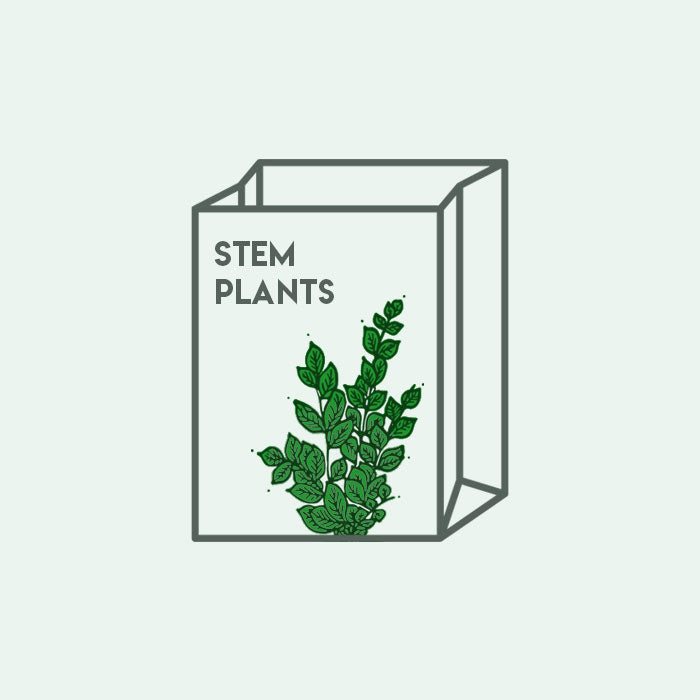 Shop Mystery Stem Plant Bag Bundles and Kits - Glass Aqua