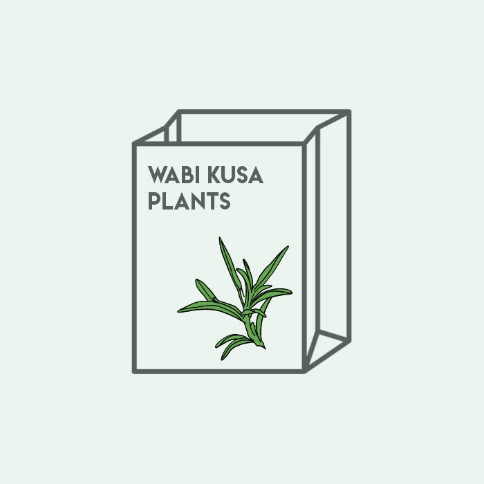 Shop Wabi Kusa Mystery Plant Bag Aquatic Plants - Glass Aqua