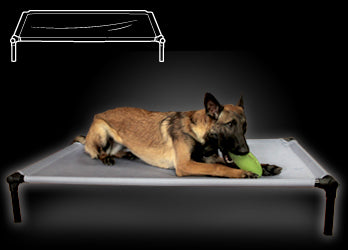 Starmark Dog Zone Pro Training Bed XL - wigglewaggleworld
