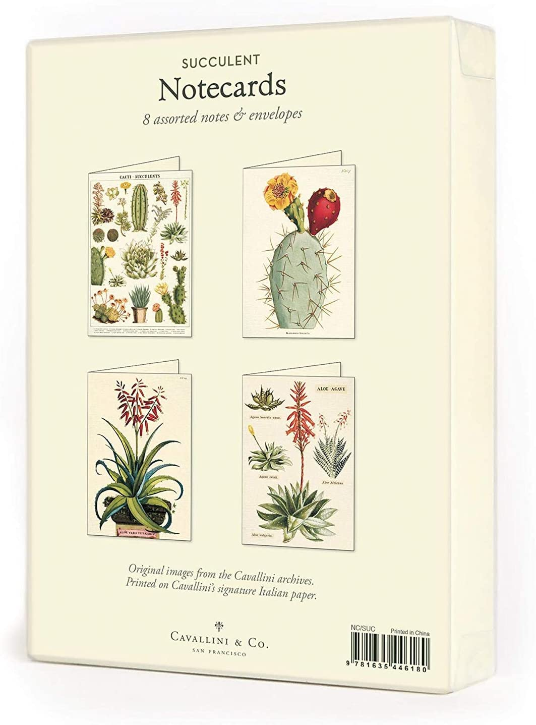 Assorted Notecards - Succulents