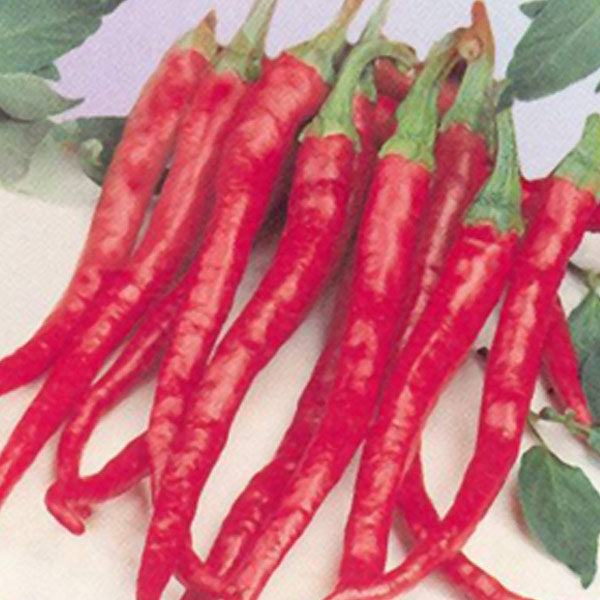Cayenne Long Red Thin