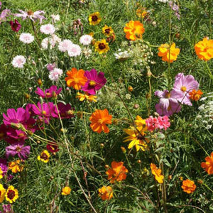 Annual Cut Flower Mix