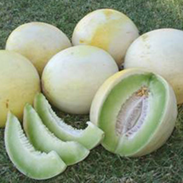 Honeydew Greenflesh