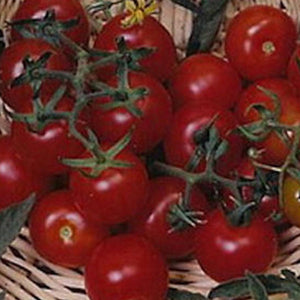 Red Cherry Large, Tomato