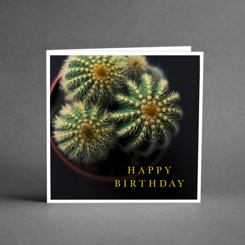 GRANDE Collection - Happy Birthday cactus [20-pack]