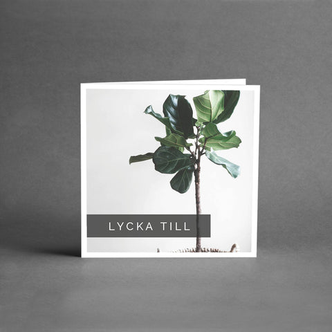 MINI Collection - Lycka till växt [25-pack]
