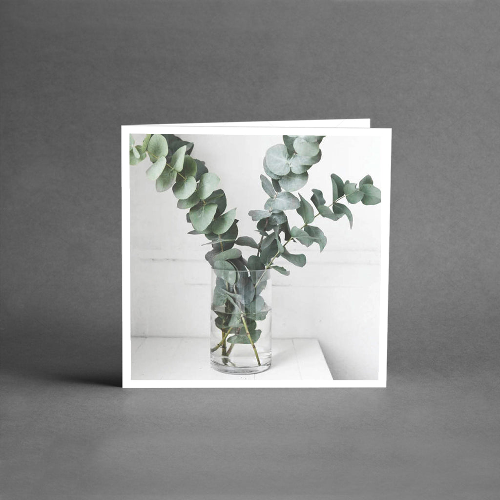 MINI Collection - Eucalyptus [25-pack]