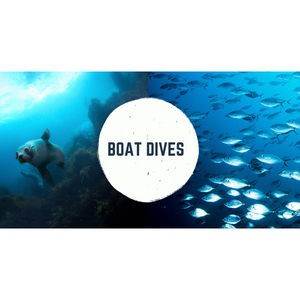 Double Boat Dive (1 Day) - Go Dive Tasmania