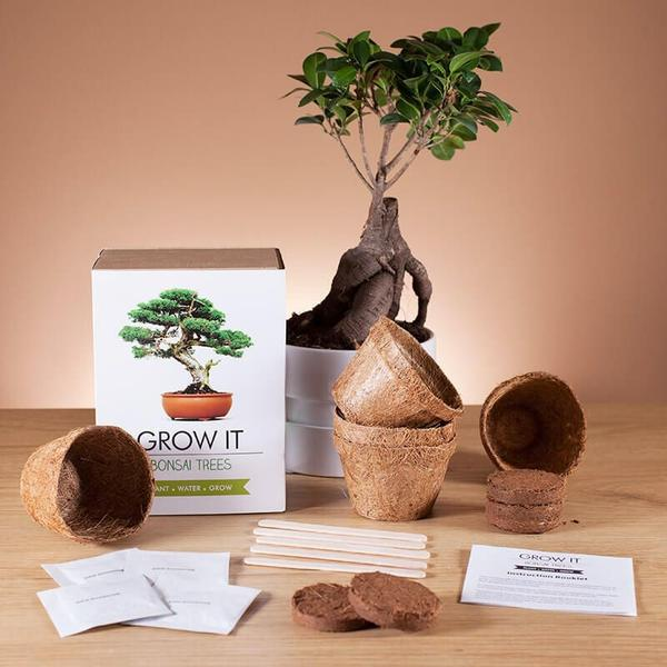 Grow It – Bonsai Trees