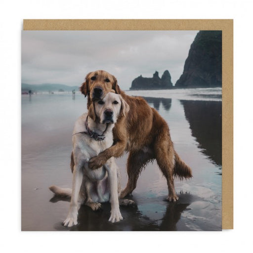 Beach Dogs Hug - Maktus