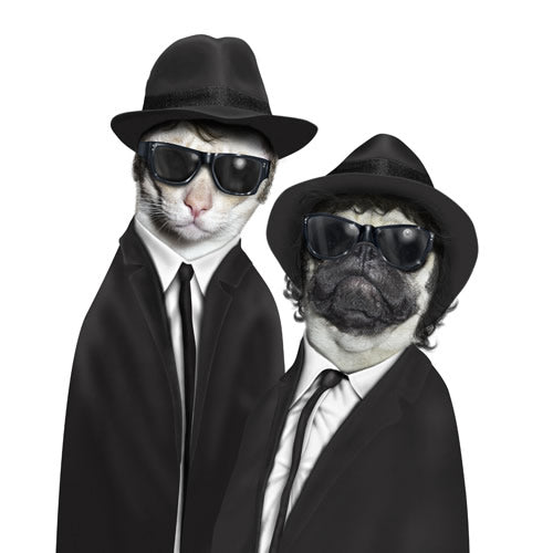 Blues Bros - Pet Rocks - Maktus