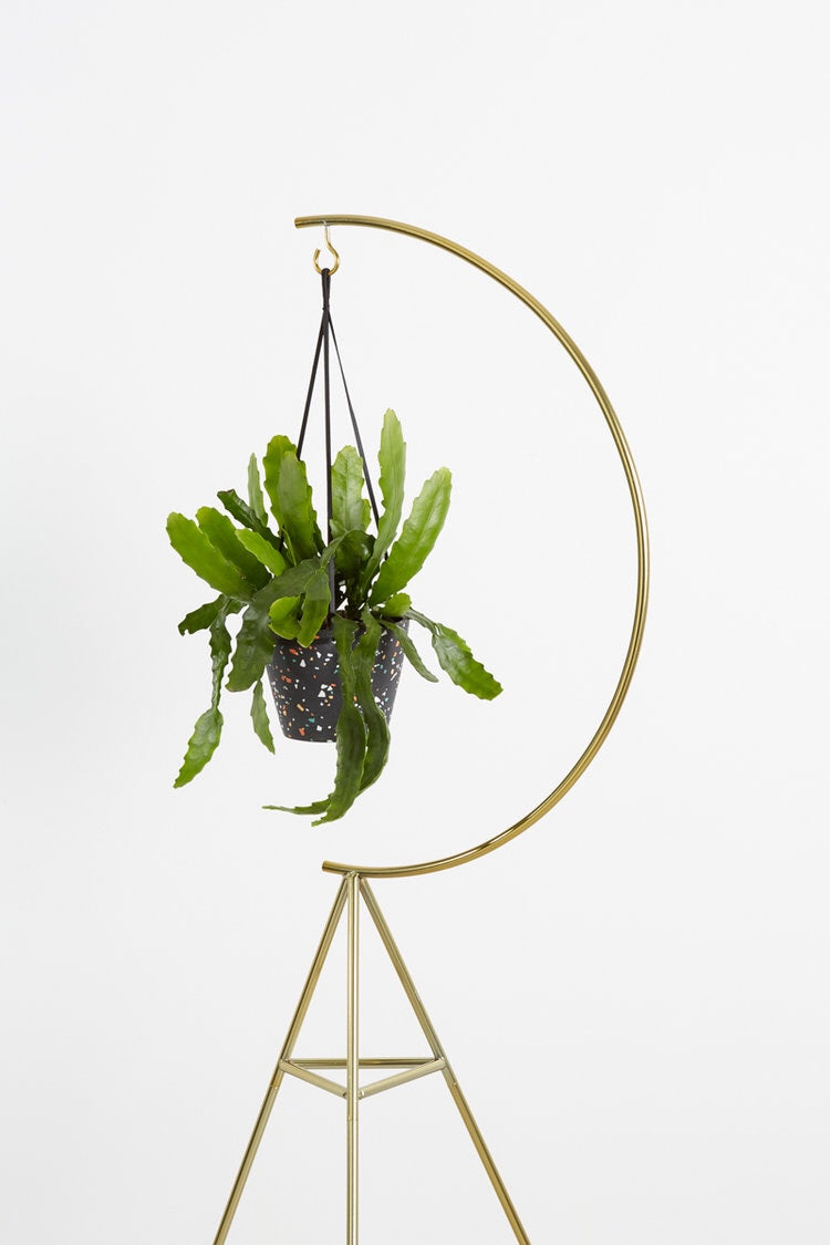 'Capra Designs' Crescent Stand Brass