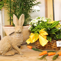 Bunny and Planted Arrangement