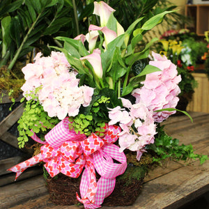 $125 Valentine's Living Arrangement Flower Basket with Bow
