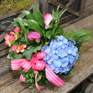 $75 Living Arrangement Flower Basket with Bow