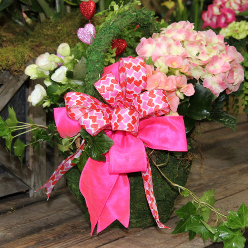 $75 Valentine's Living Arrangement Flower Basket with Bow