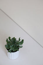 Growing - Succulent S